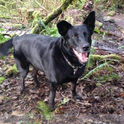 Pet Care Provider Jana Marie D's Profile Picture