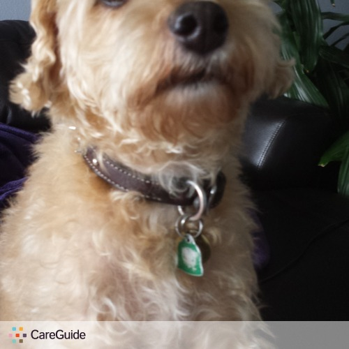 Pet Care Provider Sharmila Maharaj's Profile Picture