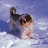 Hatboro Pet Care Provider Interested In Work