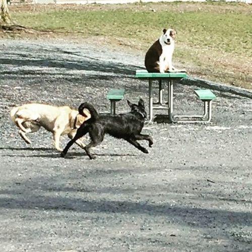 Pet Care Provider Sam H Gallery Image 3