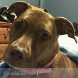 Dog Walker, Pet Sitter in Kingsport