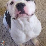 Pet Care Provider in Williamsburg