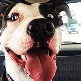 Well Trained Dog Trainer Needed in Mishawaka