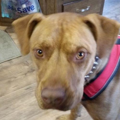 Pet Care Provider Sherri F's Profile Picture