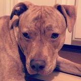 Dog Walker, Pet Sitter in Newark
