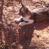 Dog Walker, Pet Sitter in Los Lunas