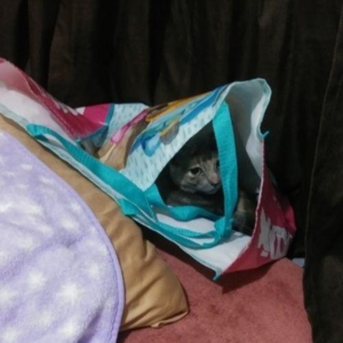 Pet Care Provider Jacqueline B Gallery Image 1