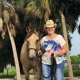 Capable equine sitter Professional for your barn.