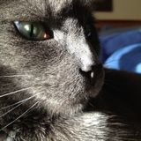 Needed: a Reliable sitter for 1 chatty kitty in Somerville, Massachusetts