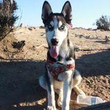 Hardworking Pet Trainer in Corona, California
