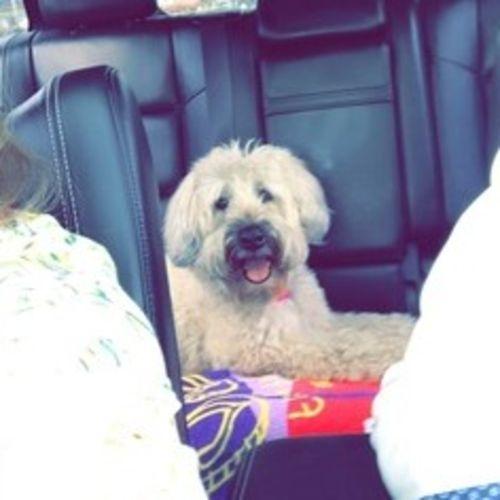 Pet Care Job Kelli Farhat's Profile Picture