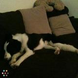 Dog Walker, Pet Sitter in Norfolk