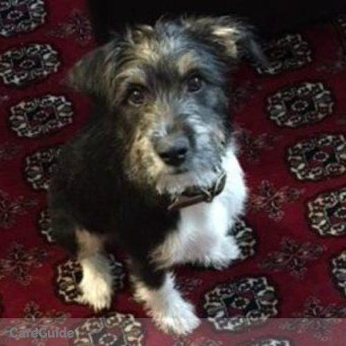 Pet Care Job Jesse McClure's Profile Picture