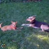 Dog Walker, Pet Sitter in Glendale