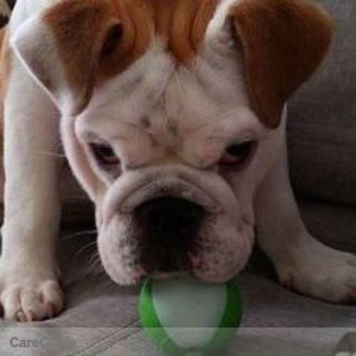 Pet Care Provider Taimi R's Profile Picture