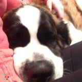 Dog Walker, Pet Sitter in Fort McMurray