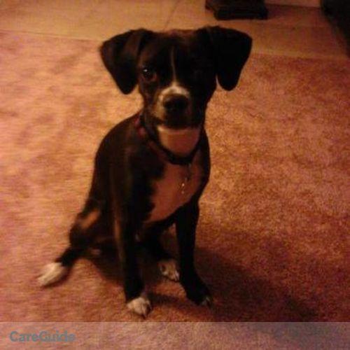 Pet Care Job Deborah Pullins's Profile Picture