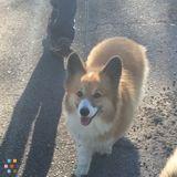 Dog Walker, Pet Sitter in West Palm Beach