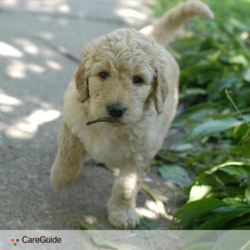 Pet Care Provider Alina Kay's Profile Picture
