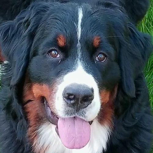 Pet Care Provider Heidi S's Profile Picture