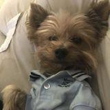 Trustworthy Dog Sitting Professional for Hire