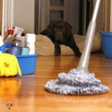 Housekeeper in Ottawa