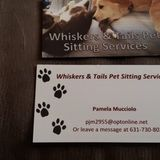 Caring Cat Sitting Professional Available Immediately