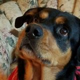 Dog Walker Job, Pet Sitter Job in Sellersville