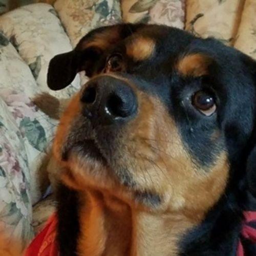 Pet Care Job Debra Martelli's Profile Picture