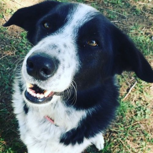 House Sitter Provider Darla C's Profile Picture