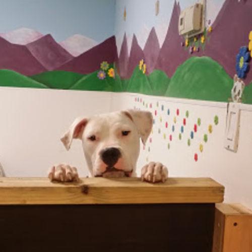 Pet Care Provider Patty M's Profile Picture