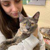 Animal Lover Searching for Clovis/Fresno Cat/Dog Sitting Opportunity