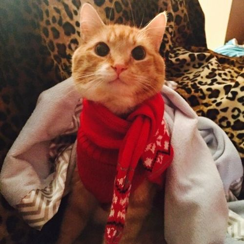 Pet Care Job DeAnna Riley's Profile Picture