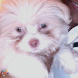 Dog Walker, Pet Sitter in Sugar Land