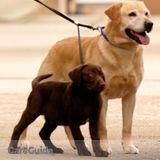 Dog Walker, Pet Sitter in Richmond Hill