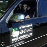 Dog Walker, Pet Sitter in Campbell