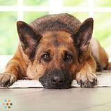 Dog Walker, Pet Sitter in Tolleson