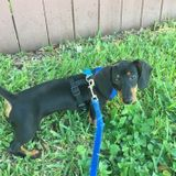 Available For a House and Pet Sitter Job in Pompano Beach, Florida