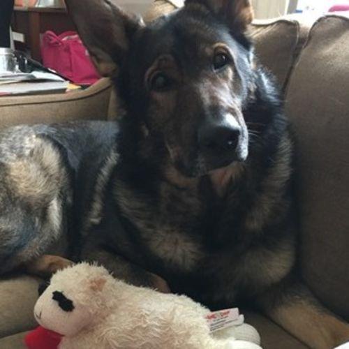 Pet Care Provider Ashley B's Profile Picture