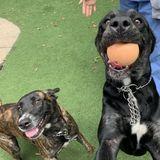 Available: Dog Walker in Rockwall/Dallas