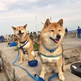 Looking for Dog Walking and Home Sitting Services in St Marys, OH