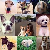 Need a Dog Walker/Animal Sitter?