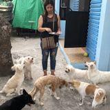 Seeking Clovis Pet Carer Jobs