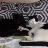 Pet Sitter in Manchester