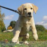 Dog Walker, Pet Sitter in Florissant