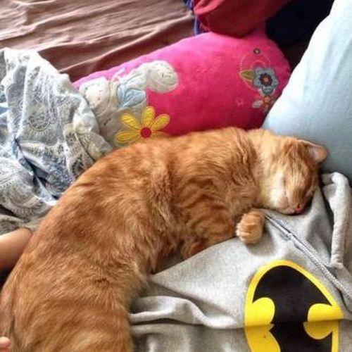 Pet Care Provider Kaitlin Penosky Gallery Image 1