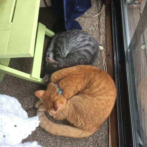 Pet Care Provider Rebecca Feron Gallery Image 2