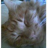 HB Cat Lady - Cat sitting by a true cat lover!
