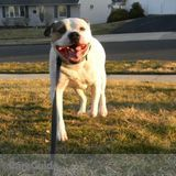 Dog Walker, Pet Sitter in Levittown