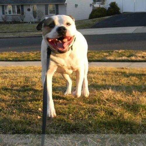 Pet Care Provider Miranda Cento's Profile Picture